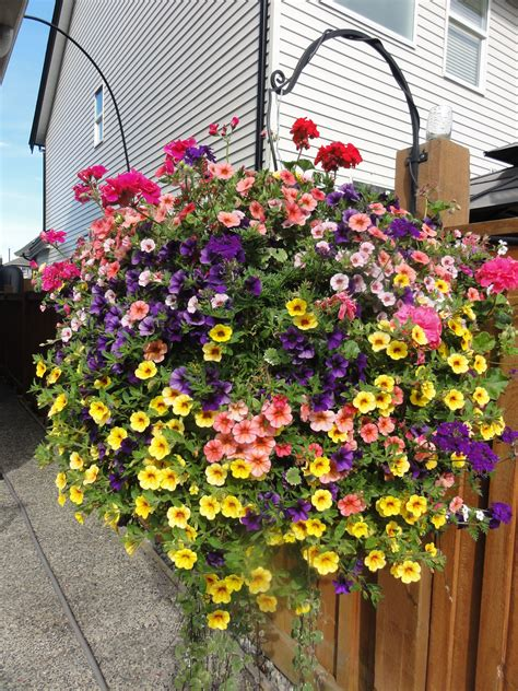 design hanging flower baskets beautiful west coast special full sun basket with