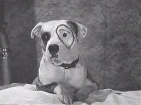 petey the petey the pup stubbydog
