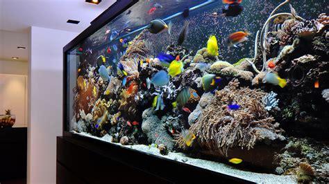 Comment Nettoyer Les Decors D Aquarium by Quand Et Comment Nettoyer Aquarium