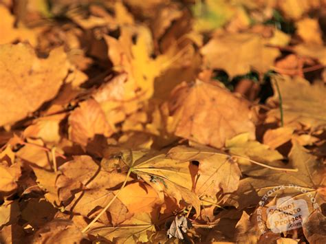 Dead Of Autumn autumn leaves free stock photo image picture