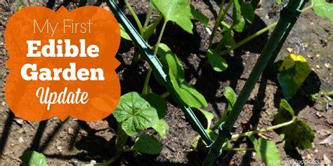 edible gardens edible garden update