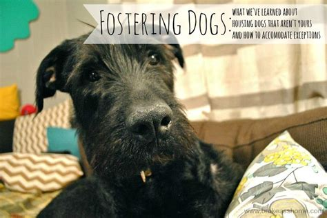 fostering dogs foster quotes