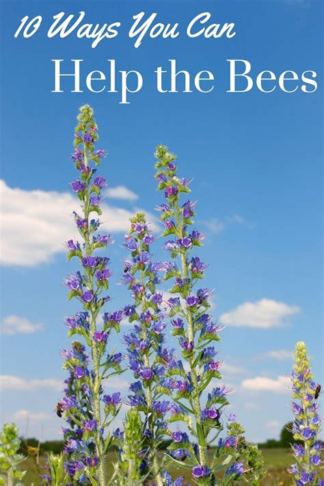 the bee friendly garden easy ways to help the bees and make your garden grow books best 25 save the bees ideas on bee attracting
