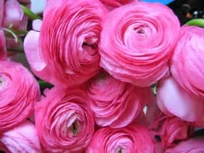 ranunculus bouquet flowers ranunculus flowers