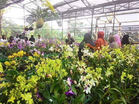 Bibit Anggrek Surabaya kung anggrek kediri tempat wisata indah terbaru di