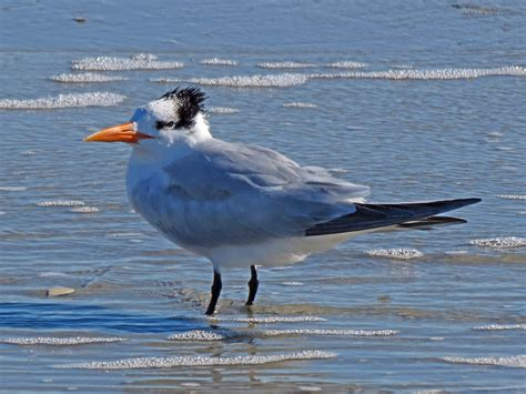 coastal photos of birds by common name by sid hamm