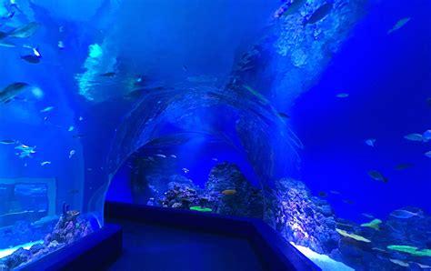 illuminazione per acquario portfolio orphek dell acquario di illuminazione a led