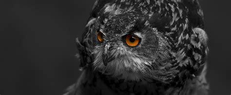 black and white in color 1000 schwarzwei 223 fotos 183 pexels 183 kostenlose stock fotos