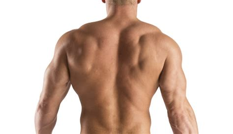 Back In The 5 tips on building back muscles trainer