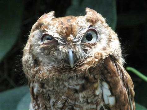 41 best images about owls closing one eye on pinterest