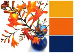 what color goes with orange velvet moth studio bright blue and orange