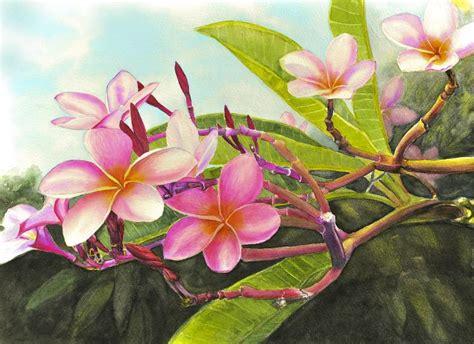 small prints plumeria orchids hibiscus cat turtle