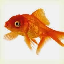 Joran Pancing Nissin umpan umpan jitu ikan fokus mancing