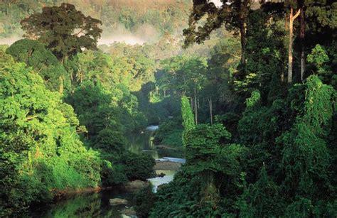 Tas Borneo Island as 7 florestas nebulosas mais ex 243 ticas que existem no planeta