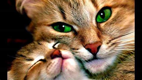 imagenes animales bonitas hermosos animales youtube