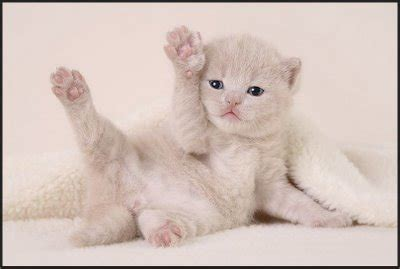 imagenes tiernas gatitos bebes imagenes tiernas de gatitos