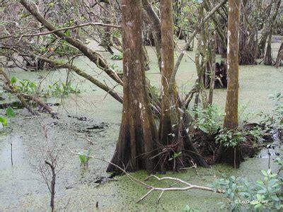 keith carver • photography • zen   corkscrew swamp feb