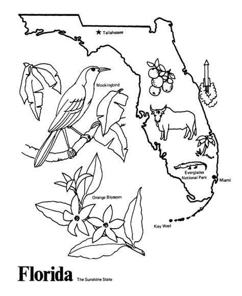 state bird coloring pages coloring home