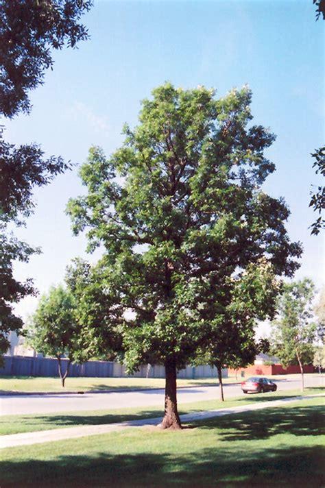 Burr Oak Gardens 5 go to trees that are for colorado front range gardens tagawa gardens