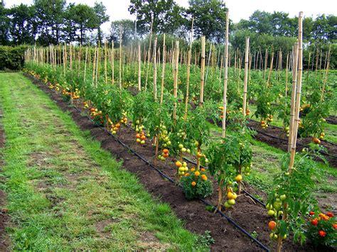 Quoi Semer En Juillet by Que Planter En Juillet Au Potager Haricots Verts Semer De