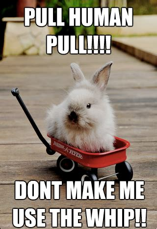 Bunny Meme - rabbit ramblings july 2013