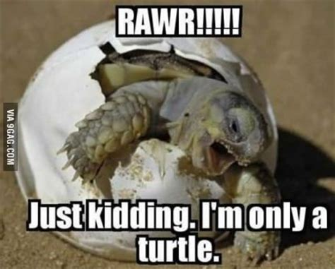Turtle Memes - cute turtle brittany look d pinterest