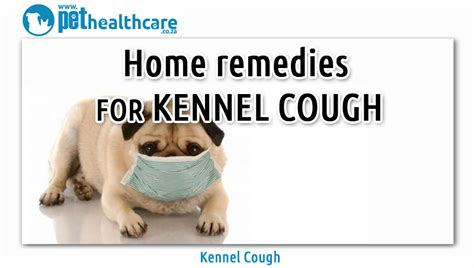 home remedies for pets to ease the symptoms of kennel