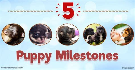 puppy milestones the 5 stages of puppyhood and what to expect from each