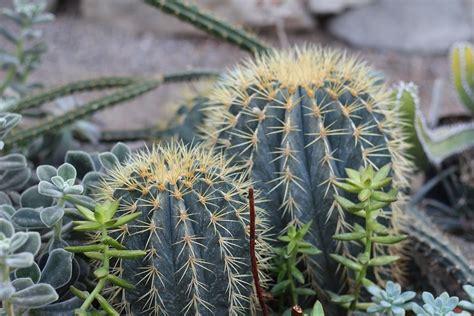 Interior Habitat Foto Gratis Planta Cactus Plantas Picos Imagen