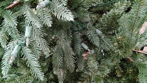 tree 10 meadow fir with 1 200 clear lights now 75 business news paulding