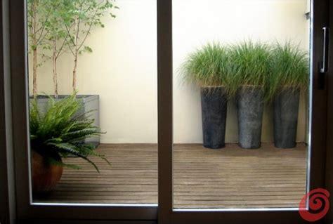 alberi da vaso per esterno il giardino in fioriera 18 alberi e arbusti in vaso