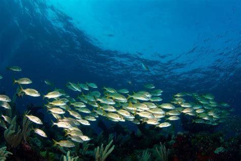 catamaran excursions riviera maya excursi 243 n a isla mujeres en catamar 225 n desde riviera maya