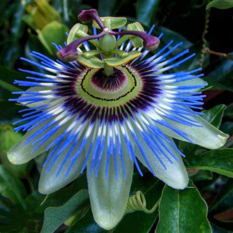 imagenes flores muy hermosas colecci 243 n de fotos de flores exoticas naturales muy