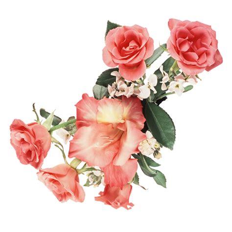 imagenes vintage en movimiento im 225 genes de rosas y flores con movimiento para compartir
