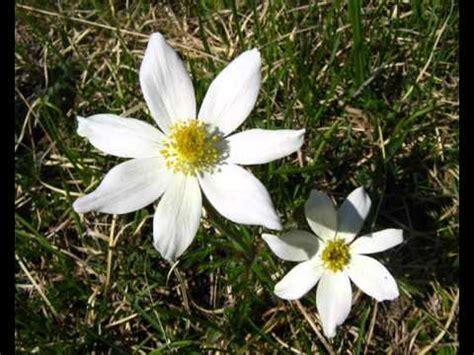 quel mazzolin di fiori testo quel mazzolin di fiori originale con testo luciano