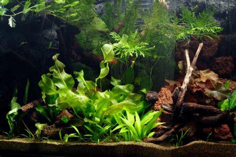 Aquascape Wood How To Set Up A Planted Tropical Community Aquarium