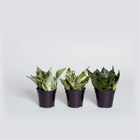 images  pet friendly plants  pinterest
