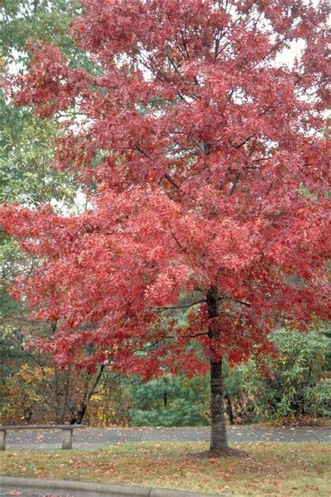 tree buy chicago illinois landscaping buy oak trees