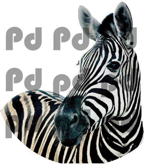 zebra wall mural zebra wall mural decal animal wall decal murals