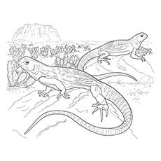 marine iguana coloring page ᗑtop 10 iguana coloring coloring pages for your little