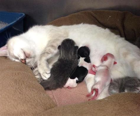 premature puppies cat nurses premature puppies warning unbelievably
