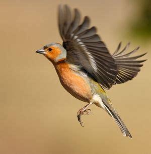 imagenes de karma bird fly flying robin 300 jpg 300 215 307 trees pinterest