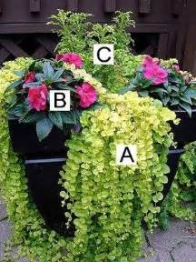 flowers plants container gardening on pinterest