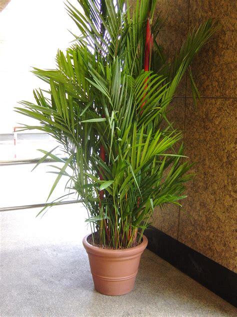 indoor plants garden groen gardens landscapes sdn bhd