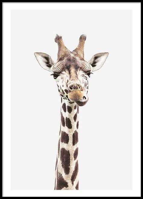 printable giraffe poster photographic print of a giraffe animal poster buy