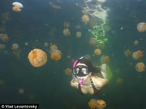 lake thronged with 10million jellyfishbut don't worry