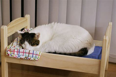 ikea cat bed cat owners in japan turn ikea doll beds into adorable cat beds