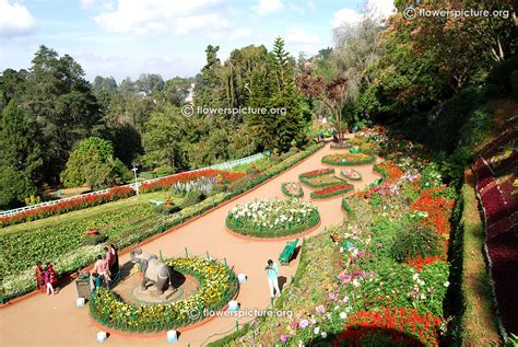 Ooty Flower Show 2015 Photos Gallery Botanical Garden Show