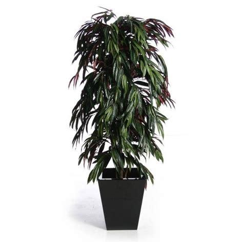 piante da arredo interno piante da interno resistenti piante appartamento