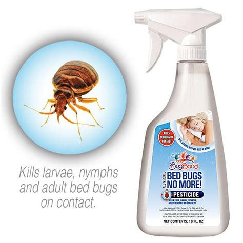 images  bed bugs  pinterest bed bug spray signs  bed bugs  life cycles
